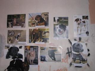 Album photo 25
